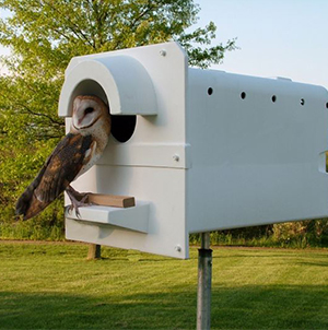 The Barn Owl Box – Pole Model